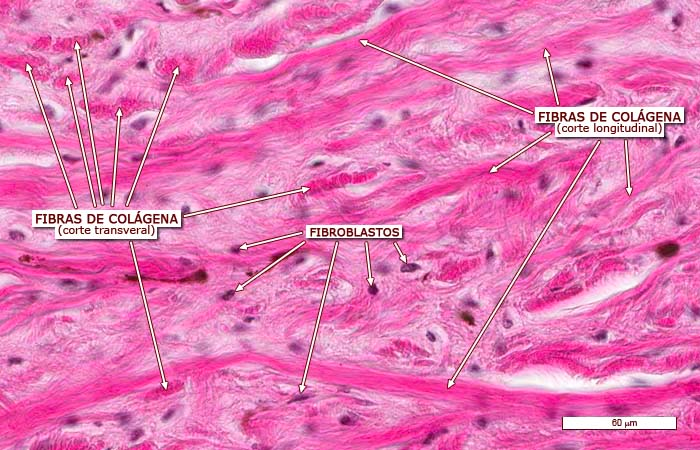 Fotos de tejido denso en el pecho